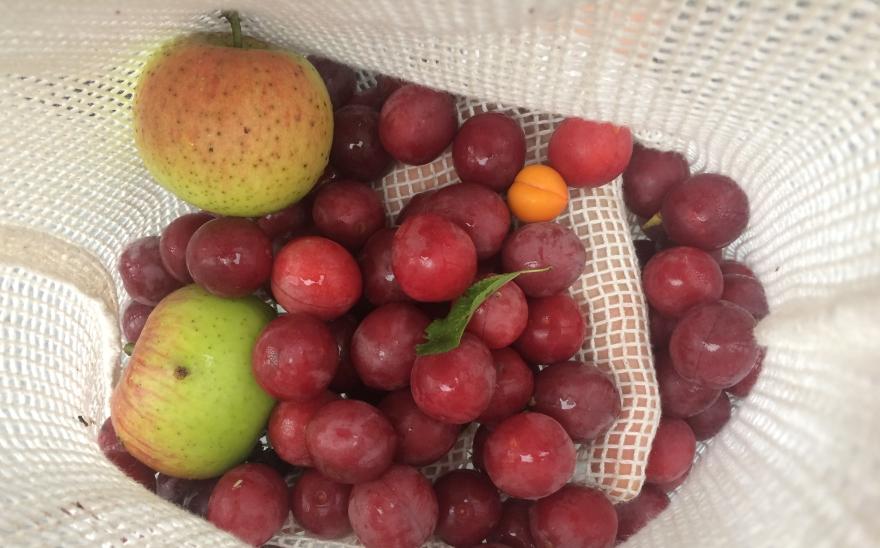 Foraged Fruit from Prague
